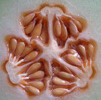 melon-seeds